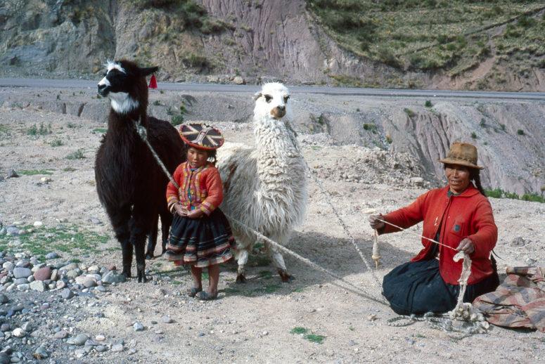 Lamas et péruviennes
