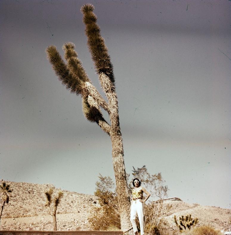 Un arbre de Josué