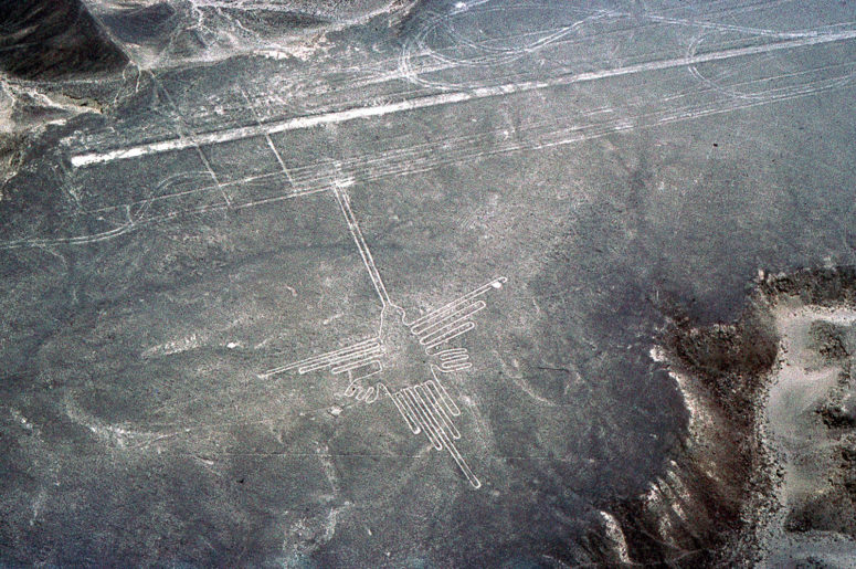 Nazca : le colibri