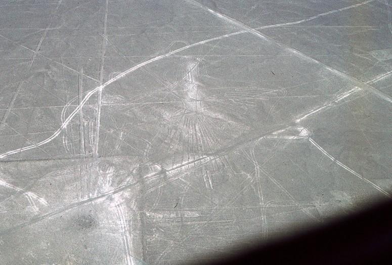 Nazca : le condor