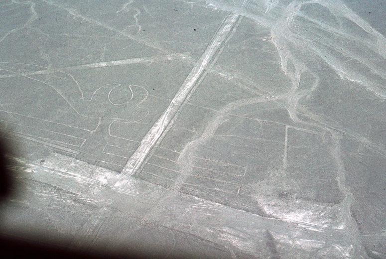 Nazca : le perroquet