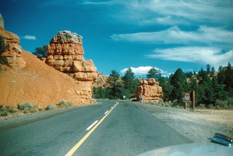 Dixie Forest - Utah