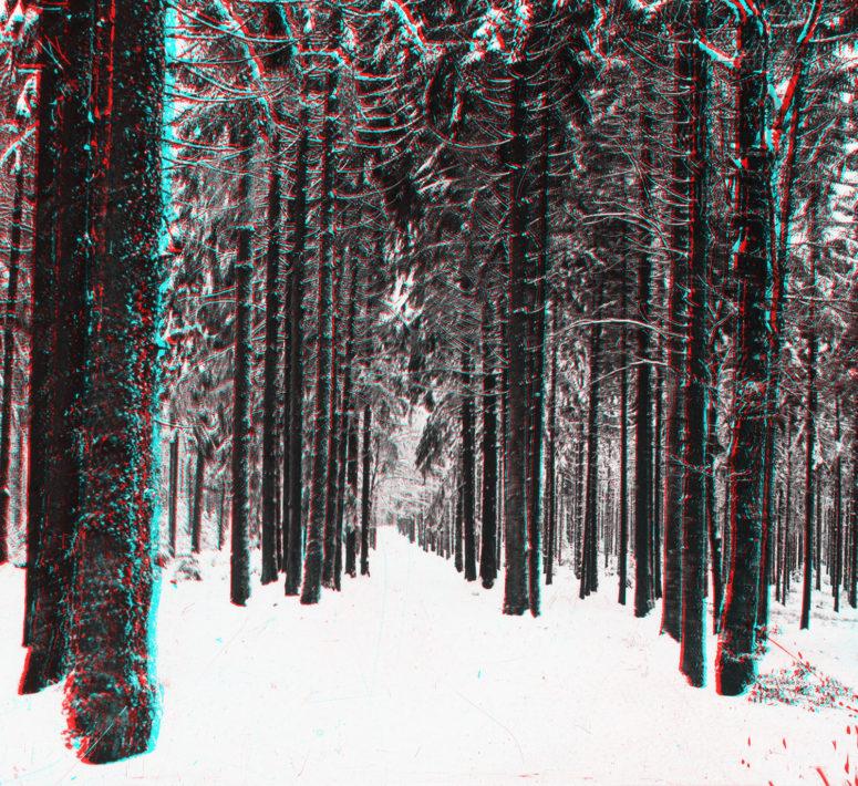 La forêt vosgienne en hiver
