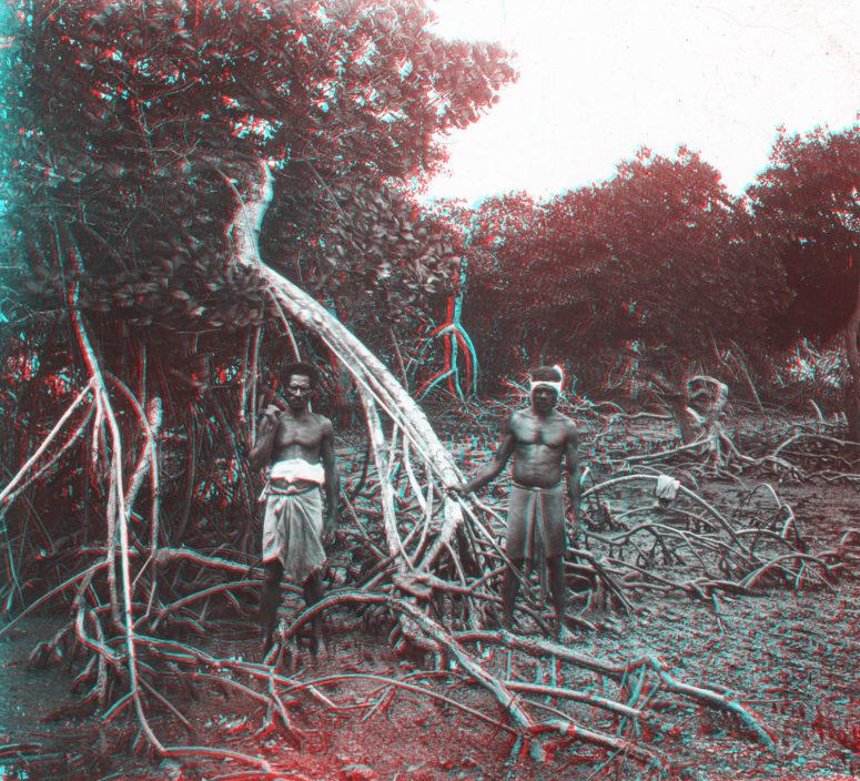Nouvelle Calédonie : Canaques dans les palétuviers