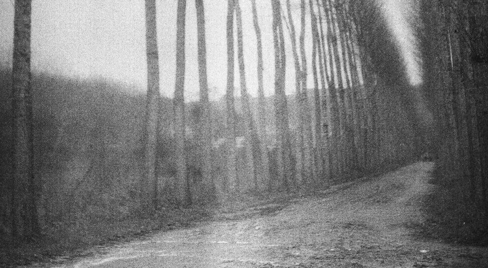 La très très longue photographie des arbres