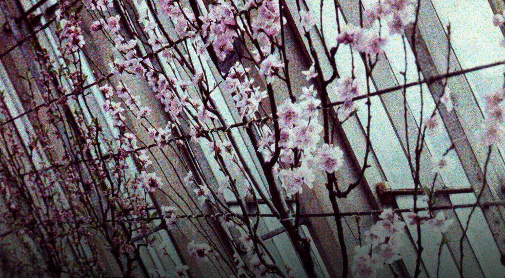 La serre (peach blossom)