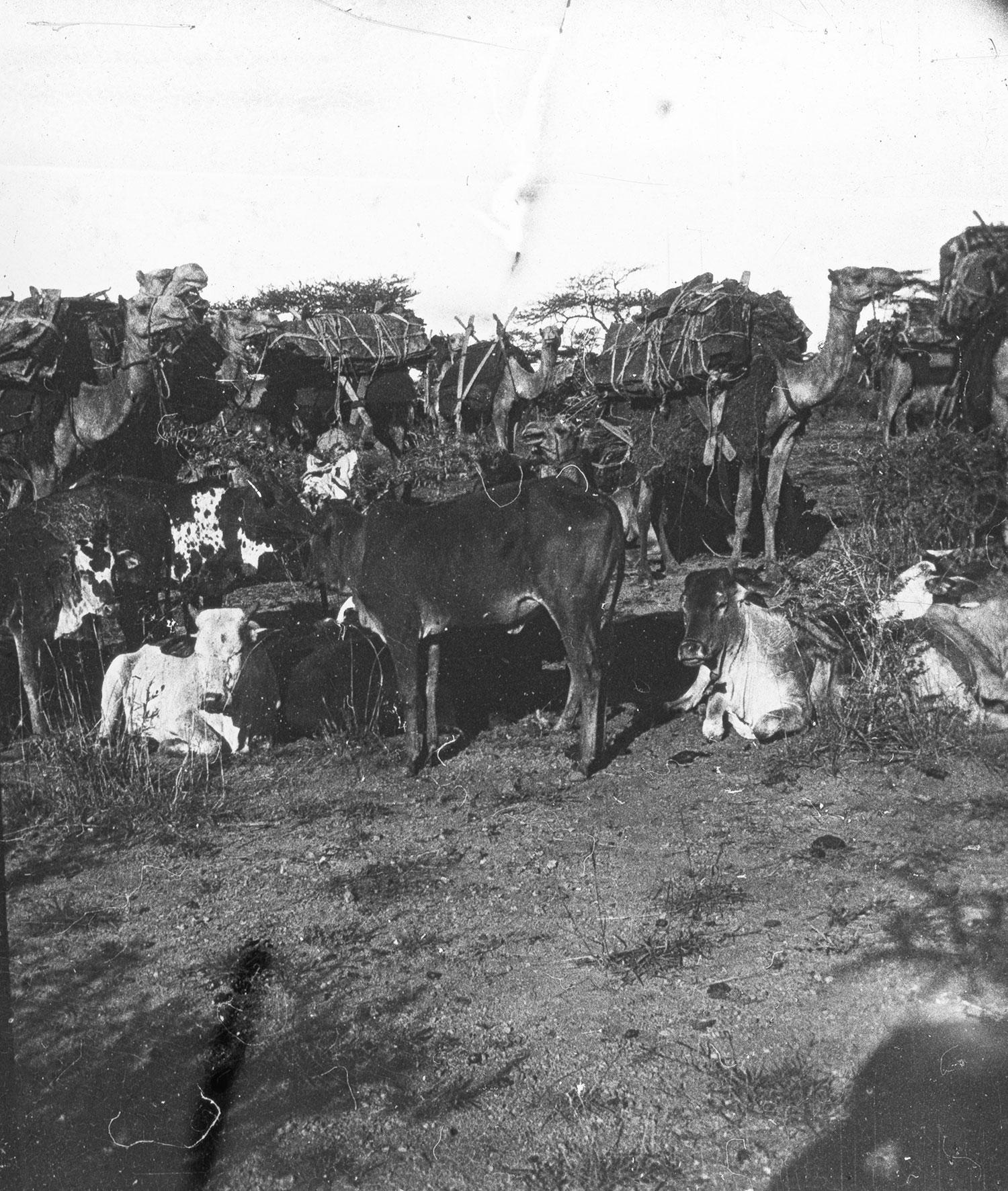 Caravane Abyssinie Mai 1911
