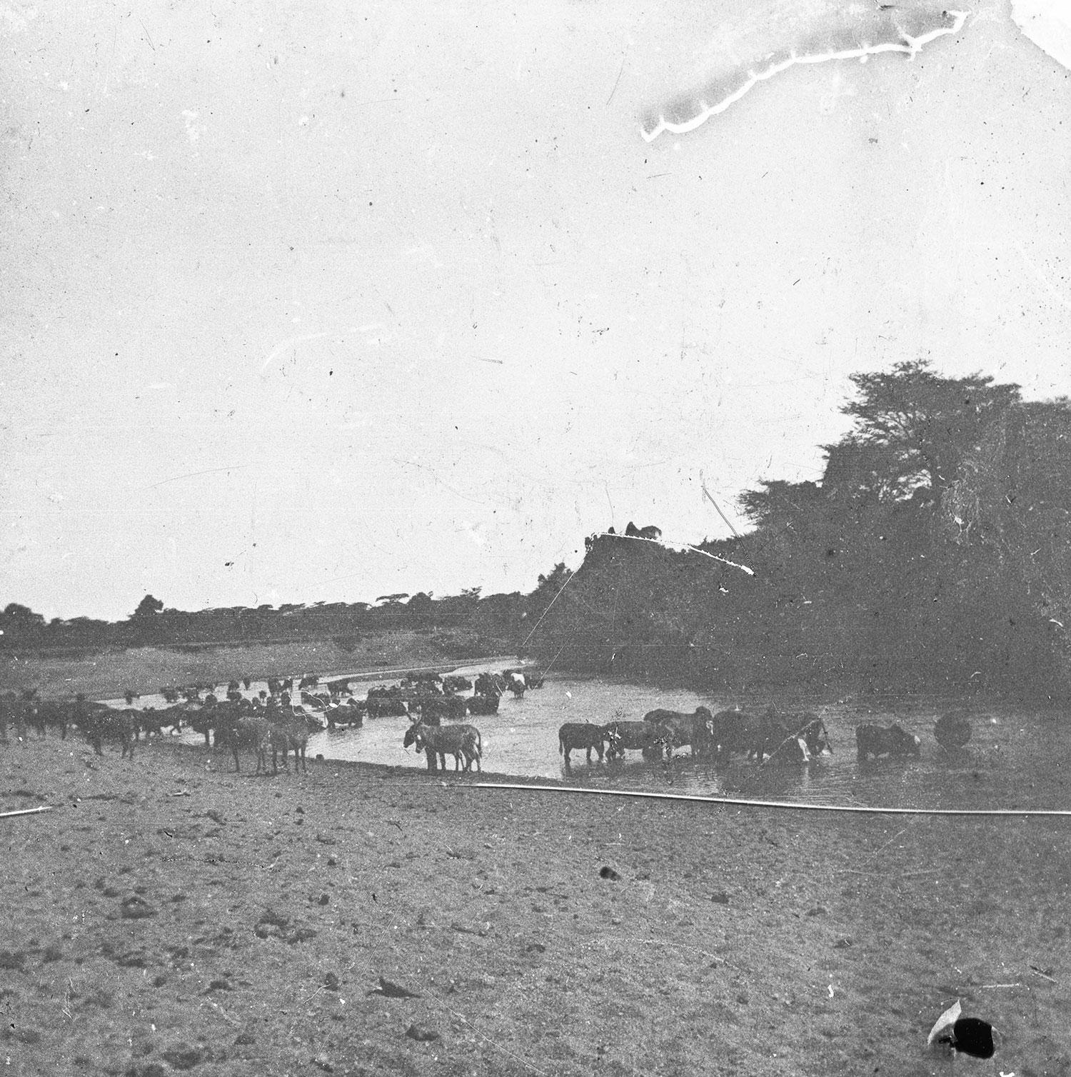 Arrasch rivière de l'Abyssinie Mai 1911